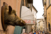 Orvieto boar's head